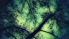 misteriosa noche (ojoadicto) Tags: noche night arbol tree ramas misterio digitalmanipulation intervenciondigital artisticphotography nature naturaleza