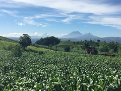 Fertile Fields - Land of Corn (cliffordswoape) Tags: partlycloudy crops green mountains volcanos pastoral rural fertile corn fields guatemala