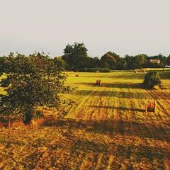 Il mattino ha l'oro in bocca. (daniland) Tags: filetto lunigiana oro alba mattino paesaggio campodigrano cielo erba sun ombra colore fieno estate sole orizzonte prato