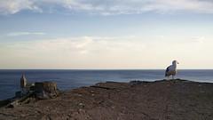 (ariannabru) Tags: lerici liguria sunset sea mare estate panorama view landscape gabbiano seagull tower rocca