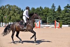 DSC_1036 (2) (ploufjf_64) Tags: paus show jumping chevaux pau 2016
