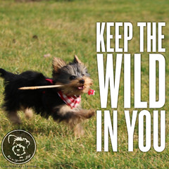 And have fun doing it! (itsayorkielife) Tags: yorkiememe yorkie yorkshireterrier quote