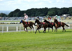Hold on! Is this the wrong way? (smcnally24601) Tags: epsom downs racing horse horses jockey riding surrey england britain summer late betting sport
