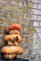 _SAM1035 (fifthtry) Tags: pumpkins deformed