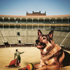 Untitled (Flamenco Sun) Tags: juxtaposition odd surreal spain span game play matador bullfight dog alsatian