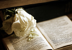 Fading knowledge (eleni m) Tags: kennis knowledge books boeken flower rose roos fading vervagen verwelken indoor petals pages paginas old oud dictionary dof stilllife