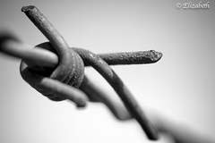 Freedom is not enough (beth3974) Tags: barbed wire