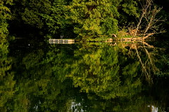 (vieubab) Tags: arbres atmosphre bois branchage branches calme couleurs extrieur escapade eau tang fort feuillage feuille rivage sonyflickraward luminosit lumire lac nature unlimitedphotos paysage reflets saveearth sony verdure vert