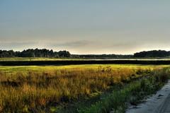 vastness (f.tyrrell717) Tags: grass vastness whit bogs