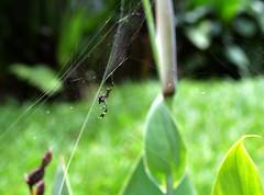 (Zahomi) Tags: araa bio sustentaible costa rica viajes naturaleza nature nikon