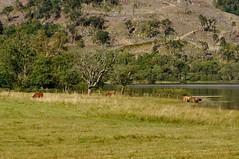 Loch Achray (robert55012) Tags: queenelizabethforestpark scotland trossachs