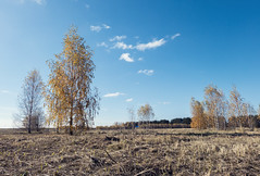 The echo of the Indian summer (andrey.senov) Tags: russia kostroma province autumn fall sky clouds trees field         fujifilm fuji xa1 fujifilmxa1 indiansummer  15faves