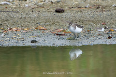 Domaine des Oiseaux (fabdebaz) Tags: domaine des oiseaux ariege 2016 septembre pentax k5