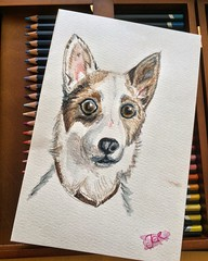 Lina Art (Jainbow) Tags: lina drawing sketch scribble pencil watercolourpencils paper jainbow dog