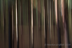 Sunlight Through Dark Woods (4orty7even) Tags: autumn trees brown sunlight abstract black blur colour green fall nature grass leaves lines woodland dark landscape outside countryside leaf movement woods october purple stripes country magenta trunk ferns icm flowersplants eshercommon img201410250656