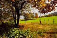 _DSC1220 (andoni.guridi) Tags: autumn fall spain otoño navarra 2014 basaburua