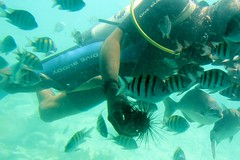 Diver showing off urchin (LarryJay99 ) Tags: cruise fish underwater stmartin diver semisubmersible glassbottomedboat canonefs18135mmf3556is ilobsterit urchinhold