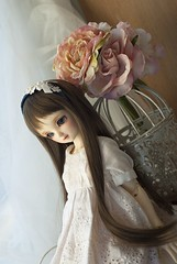 (Muri Muri (Aridea)) Tags: cute doll may super bjd vs dollfie volks abjd msd sdc