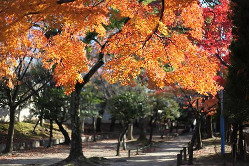 秋の散歩道です
