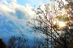 Winter Sky (rhondabartley504) Tags: trees sky sun clouds indianapolis indiana infocus highquality
