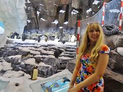 Sea world (Elysia in Wonderland) Tags: world sea vacation usa holiday cute ice birds america penguins lucy orlando ride florida september icy elysia 2014