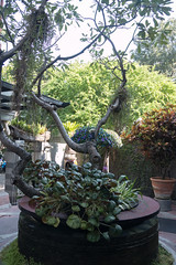 IMG_9929 (jaglazier) Tags: trees plants gardens architecture buildings thailand december bangkok cities hotels urbanism deciduoustrees 2014 patios krungthepmahanakhon 121914 babylonhotel copyright2014jamesaglazier