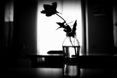 Life is a foreign country (Cristian Ştefănescu) Tags: blackandwhite monochrome silhouette rose blackwhite contrejour trandafir