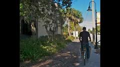 Riding a METROFIETS in Sunny Sarasota (METROFIETS) Tags: beach bike bicycle florida bikes sarasota beachbike cargobike beachcruiser enjoytheride bikelife metrofiets keepriding bikesrq palmtreesandbikes