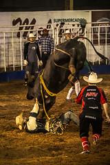 Segura Peão (muriloribas) Tags: brazil paraná brasil bull rodeo sul boi rodeio 2014 jacarezinho competição segurapeão fetexas fotomuriloribas iinteiror