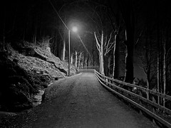 On an evening stroll (Maudnait) Tags: road trees evening trer mona lamppost bergen vei ilta weg vej vg kveld trr aften kvll lygtepl lyktestolpe lyktstolpe sortoghvid svartochvitt flysvingene maudhnait maudnait