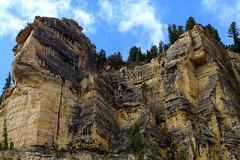 Cliff Face (arbyreed) Tags: cliff rock pine landscape outside rocks limestone fir geology highcliff cedarcanyon ironcountyutah arbyreed