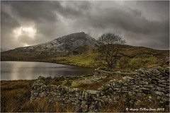 Ruins at Llyn y Dywarchen (angeladj1) Tags: mountain lake tree ruins snowdonia northwales llynydywcharen
