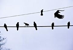 (Stefano☆Majno) Tags: india lake travelling lines birds misty photography cloudy foggy sri lanka round crows wandering kandy stefano reportage majno cnaon