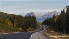 Trans-Canada Hwy, Banff National Park (Alberta) (Anna & Oskar) Tags: travel viaje canada canon landscape paisaje can alberta banffnationalpark canadianrockies sawback 1dx montaasrocosas 5dmarkii kananaskiscountryclaresholm