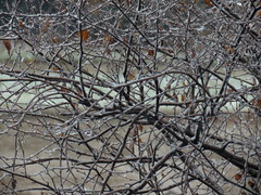 11/24/14  11:30  Skokie IL (Renee Rendler-Kaplan) Tags: november snow wet weather canon gbrearview branches windy 1130 snowing darn gapersblock wbez brr 2014 insidelookingout chicagoist livingroomwindow littleleaves nothappening coldoutsidewarminside skokieillinois reneerendlerkaplan canonpowershotsx40hs treeiplanted butimalmostoutofwoodforthefireplace thankschuckstaywarm thoughticoulddoalittlepruninginthegardentoday yesitssticking