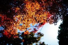 Kyoto dreaming (ルーク.チャン.チャン) Tags: japan 50mm kyoto bokeh sony voigtlander dreamy f11 a7 nokton