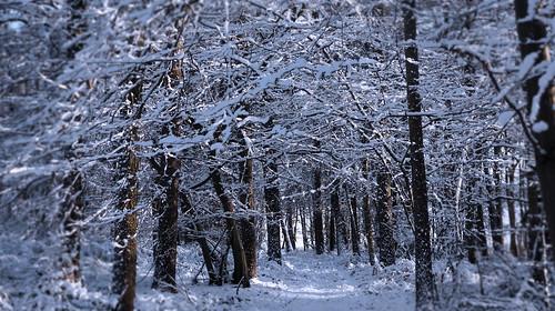 The magic of snow