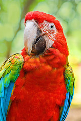 Colorful (Londonietis) Tags: bird canon parrot mauritius macaw