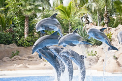 Loro Parque (mrs_fedorchuk) Tags: show parque vacation santacruz nature animals canon island honeymoon tortoise dolphins tenerife canarian puertodelacruz orcas loro canari loroparque 2014
