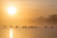 Morning Brigade (gseloff) Tags: birds fog sunrise texas pasadena americanwhitepelican mudlake armandbayou kayakphotography gseloff galvestonbayestuary