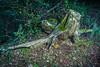 angel caido del bosque (hecho por la naturaleza y para la naturaleza) Tags: bosque angelcaido llinarsdelvalleslapedrera figurasnaturañeza