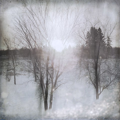 between bare trees (anniedaisybaby) Tags: trees winter blur square frost view bokeh desaturated wintermorning flypaper thechoir facingsoutheast absenceofcolour pareerica iphoneography texturesthanksto betweenbaretrees