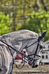 Sterling Stilver (CassieThomasPhotography) Tags: horse white grandprix horseshow thoroughbred showjumping photooftheday picoftheday warmblood beautifulhorse