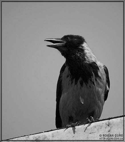 Неглупая птица
