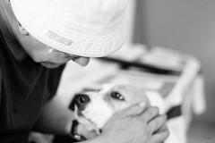 (annatsukino) Tags: animal dog beagle man bw annatsukino photography catalonia