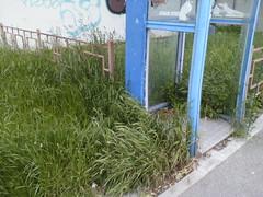 IMG09667telef (chicore2011) Tags: phone box disused