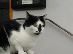 Claudia (ute_hartmann) Tags: cat eingang claudia