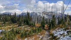 Revelstoke National Park (LG G4 smartphone) (Jeffrey Sullivan) Tags: park camera travel copyright canada jeff mobile photo g4 phone cellphone roadtrip columbia blogger images lg september smartphone national british sullivan revelstoke 2015 lgg4