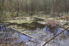 Wood and Water (Tony Shertila) Tags: wood trees england water weather forest out europe day cheshire britain outdoor clear swamp mere delamere 20160423142800