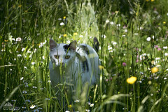 Lights Of Spring  (Xena*best friend*) Tags: wood wild italy pet cats pets animal animals fur chats spring furry woods feline flickr colours outdoor tiger kitty kittens whiskers piemonte gato calico purr paws rg gatto katzen pussycat markings feral wildanimals richardgere wildherbs piedmontitaly allrightsreserved lightsofspring efs18135mm canoneos760d digitalrebelt6s